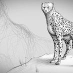 Square fundamentals drawing animal anatomy 542 v1