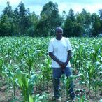 Thumbnail yara photo of corn with high and low fertiliser p1160398 1200x1200